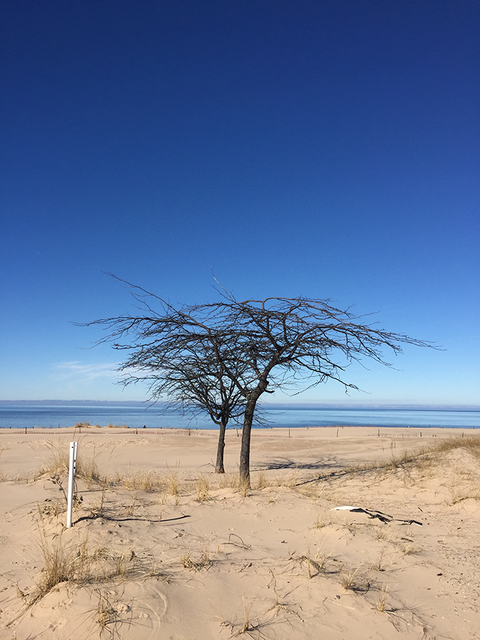 muskegon state park - beach tree